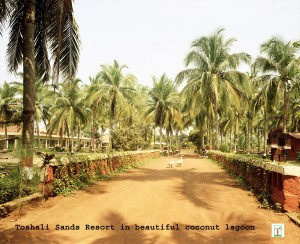 Toshali Sands Coconut trees