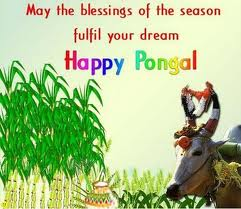 Happy Pongal (Image courtesy way2reaonline)